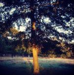 Richmond Park 4