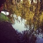 Richmond Park 5