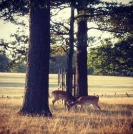 Richmond Park 6