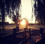 Richmond Park 7