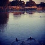 Richmond Park 10