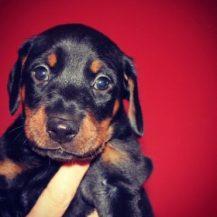 Puppies 007