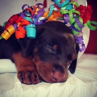 Puppies 009