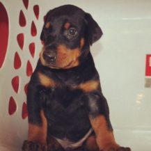 Puppies 014