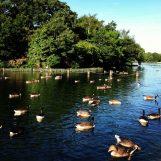 Hyde-Park-London-17