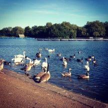 Hyde-Park-London-7