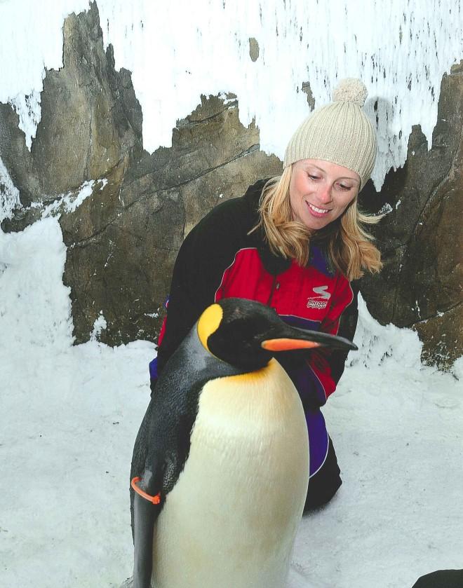 penguins5