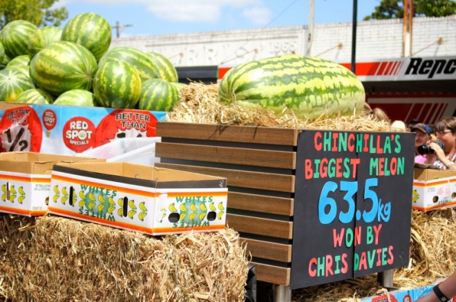 We love big melons … this year's biggest melon falls a fair bit short of the record of 87kg, but it was still huge.