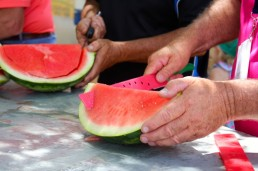 Chinchilla Melon Festival