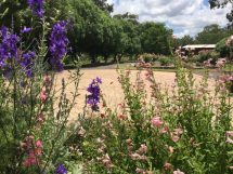 Mrs C's stunning English-style garden.