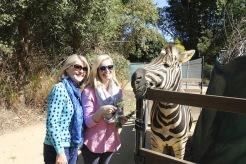 With Zambeze the Zebra.