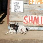 Regional Flavours Weekend dog