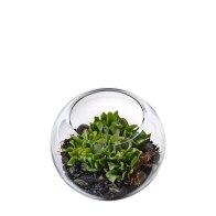 Interflora TaylorSucculent Terrarium,$70.50